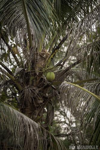 Kokosowy raj