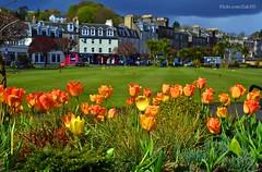 (Zak355) Tags: flowers scotland town tulips scottish wintergardens bute rothesay isleofbute