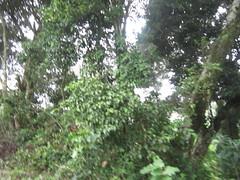 Munnar 071.JPG (invisibleindian2001) Tags: munnar
