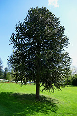 zugerland_064_28042016_11'47 (eduard43) Tags: trees lake tree see bume baum cham zugersee 2016 villettapark