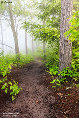 Into the Mist- June 2, 2016 (zachary.locks) Tags: new morning trees mist green leaves fog forest sunrise river early quiet hiking foggy eerie trail wv westvirginia gorge pathway dense cy365 zlocks