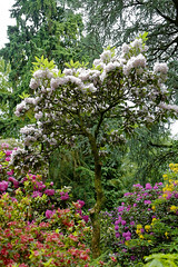 Mai Botanik - 2016-0011_Web (berni.radke) Tags: may growth mai botany botanicalgarden mnster botanik botanischergarten wachstum