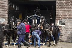 2016-Ameland016 (Trudy Lamers) Tags: wadden ameland eiland paarden reddingsboot reddingsactie