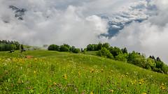above the clouds (hjuengst) Tags: flowers alps clouds meadow wiese wolken liechtenstein alpen vaduz philosophenweg triesenberg masescha