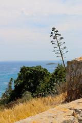IMG_1720.jpg (hjimmy schlter) Tags: ibiza es eivissa spanien 2016 balearischeinseln