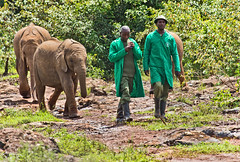 David Sheldrick Elephant Orphanage 10 (Grete Howard) Tags: safariinafrica safari whichsafaricompany bestsafaricompany calabashadventures travel holiday africa kenya elephants davidsheldrickwildlifetrust elephantorphanage wildelife animals nairobi