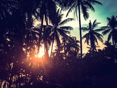Philippines - Manila and Palawan (2016 03-04) -145.jpg (ikeofspain) Tags: trip holiday apple island asia paradise tour philippines tropical southeast elnido palawan lightroom 2016 hondabay nacpan iphone6