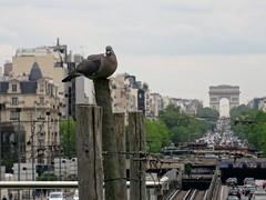 arc de triomphe et barbels (Jeanne Menj) Tags: paris pigeon arcdetriomphe oiseau ladfense barbels