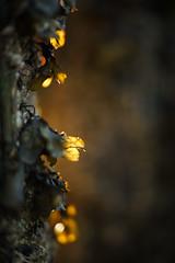 Glowing (Helena Normark) Tags: norway norge glowing trondheim srtrndelag a7 voigtlnder goldenlight oldpier trondheimsfjorden ranheim nokton5015 cv5015 nokton50mmf15 sonyalpha7 decayingpier