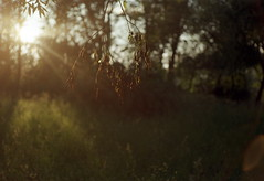 Through the leaves (suxarik) Tags: light sun color film nature gold diy nikon warm ray dof kodak bokeh rangefinder scanned nikkor expired shining rotary rf s2 selfdeveloped c41 kodakgold200 jobo nikons2 cpe2 minoltadimagescan