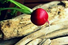 flying radish (overthemoon) Tags: wood leaves vegetable driftwood crossprocessing utata root radish ip 237 ironphotographer utata:project=ip237