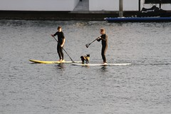 Water Sports (*SIN CITY*) Tags: ocean people dog ski water sport puppy fun skull boat surf play jet paddle australia row jetski scull rower goldcoast dogpaddle paddleboard