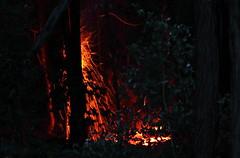 sparks in the dark (alden0249) Tags: sparks bushfire australianlandscape