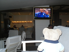 Nashunal Anfem (pefkosmad) Tags: bear vacation england holiday ted june toy hotel fan football stuffed soft teddy euro soccer fluffy games plush matches 2016 finas holibobs tedricstudmuffin