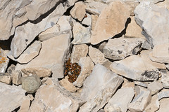"""Ladybugs • <a style=""""font-size:0.8em;"""" href=""""http://www.flickr.com/photos/63501323@N07/27477270985/"""" target=""""_blank"""">View on Flickr</a>"""