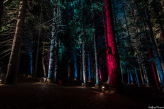 Magnificent multicolor trees (NewOc7) Tags: light festival garden queenstown luma