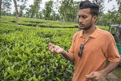 Srimangal-6123 (BohemianTraveler) Tags: asia tea bangladesh srimangal srimongol sreemangal