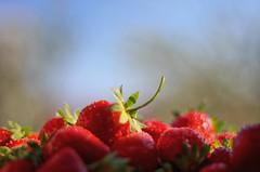 Taste me first... (Sudhakar Madala) Tags: strawberries strawberry berries fruit bokeh canon eos healthy food vitamin berry fruits taste tasty yummy juice