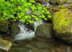 Cascading Stream (saganorth2000) Tags: longexposure leaves waterfall washington nationalpark stream boulders cascade mossy olympicnp vinemaple