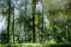 Sunken Woods I (shotreverseshot) Tags: wood water forest woods nuremberg impressionist nrnberg reflexionen reflektionen gehlz alterkanal refelxions impressionistisch ludwigdonaumainkanal ludwigskanal