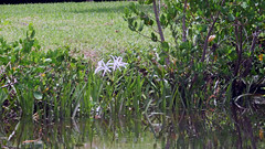 Wild Flowers (soniaadammurray - SLOWLY TRYING TO CATCH UP) Tags: flowers trees usa green nature water grass creek reflections shadows florida boating sarasota quintaflor digitalphotography phillippicreek