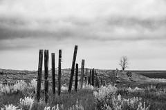 Alone on the prairie (jeremyrebeccacarter) Tags: trees blackandwhite classic clouds fence farm alberta grassland lonetree