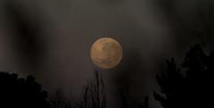 0Z4A1366 sunrise and moonset (francois f swanepoel) Tags: draculamaan draculamoon fullmoon moonoverbourbonstreet sting volmaan weskaap westerncape westerncapedraculamaan sunrise moonset