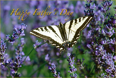 Happy Father's Day (Karen McQuilkin) Tags: butterfly dad sunday joy wishes swallowtail happyfathersday karenmcquilkin