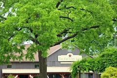 IMG_3764 (joyannmadd) Tags: amish horses intercourse pennsylvania kitchenkettlevillage farm animals lancaster coumty pa farms nature outdoors