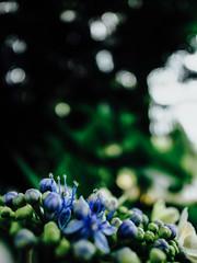 * (t*tomorrow) Tags: flower   grd grd4