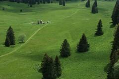 Plateau d'Herbouilly (Vercors) (Samuel Raison) Tags: mountain montagne nikon vercors herbouilly hautsplateauxduvercors nikonpassion
