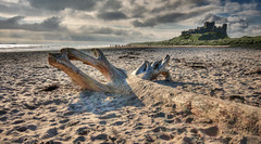 Bamburgh driftwood.. (Stu115) Tags: sea castle beach coast sand northumberland bamburgh
