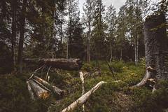 forest vibes (philipp_mitterlehner) Tags: wood nature forest landscape austria view hiking wildlife exploring adventure lookslikefilm d810