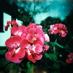 spring (somekeepsakes) Tags: 120 6x6 film closeup analog mediumformat germany square deutschland spring lomo xpro crossprocessed europa europe lightleak analogue e100vs 2012 frhling quadratisch closeuplens kodakektachromee100vs mittelformat lichteinfall