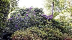 isole borromee (17) (giangian239) Tags: lago acqua blu giardino maggiore albero verde prato statua monumento isola isole borromee madre bella superiore panorama paesaggio lungolago