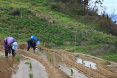 Senmaida (1000 Rice Fields) (satoson) Tags: japan  ishikawa wajima senmaida     canon5dmarkii 1000ricefields