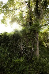Watership Down (johnma.com.au) Tags: old horse tree broken beautiful leaves wheel john garden ma photography bush artist peaceful most nostalgic cart magical shrubs heavenly idealic seren darqhorse