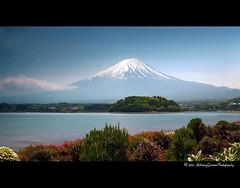T h e F i n a l S o u n d (AnthonyGinmanPhotography) Tags: flowers lake mtfuji kawaguchiko lakekawaguchi nd110 bwnd110 olympuse620