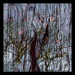 Reflets-2013-09 (Coquelet) Tags: trees reflections pages arbre reflets formes flaques photosperso