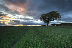 Field work (SwaloPhoto) Tags: sunset tree field clouds scotland fife farming using masks hedge crop blended layer manually leefilters canoneos5dmkii distagont2821ze