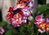 A Bouquet of Beauty (matlacha) Tags: ocean uk flowers christchurch plants nature gardens blossoms mudeford cottages mygearandme flowerthequietbeauty