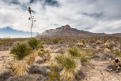Cactus & Mountains - Guadalupe Mountains National Park, Texas