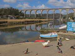 Around Calstock/2 (Joanpix) Tags: england cornwall viaduct tamarvalley calstock aonb