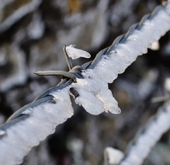 Barbed frost (Emily Sharples) Tags: winter cold fence wire frost barbedwire
