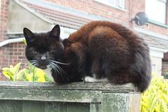 Holly (Moldovia) Tags: pet animal cat feline pussy 15 holly pointandshoot catalog pointshoot fifteen moggy catpix catspotting catmoments catnipaddicts catsunleashed fujifilmfinepixhs20exr