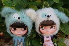 Special minty ice bear and doggie helmet set