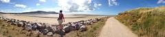 Deganwy beach (Cmyk77) Tags: summer beach nature pen olympus panoramic olympuspen ep1 northwales deganwy