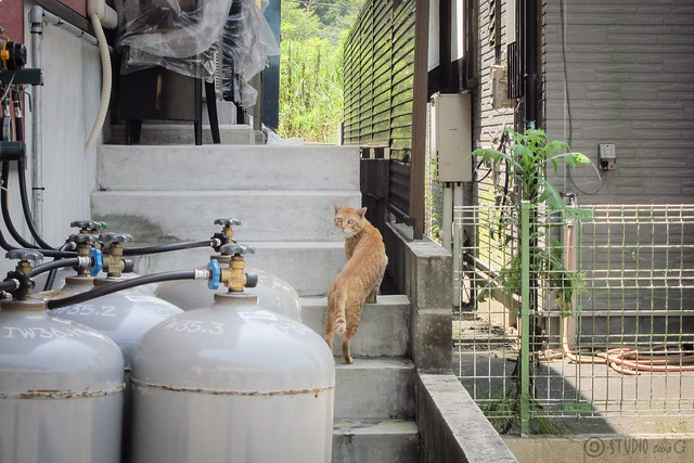 Today's Cat@2013-08-14