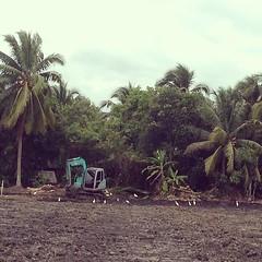 เหล่านกพากันรุมล้อมรอบรถแมคโครตักดินที่กำลังทำงานอยู่