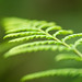 "Fern Leaf • <a style=""font-size:0.8em;"" href=""http://www.flickr.com/photos/101688182@N03/9834484504/"" target=""_blank"">View on Flickr</a>"